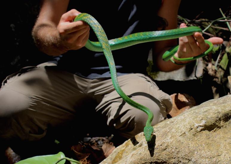 2015 Belize parrot snake