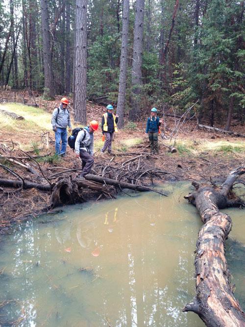 eldorado wetlands surveys