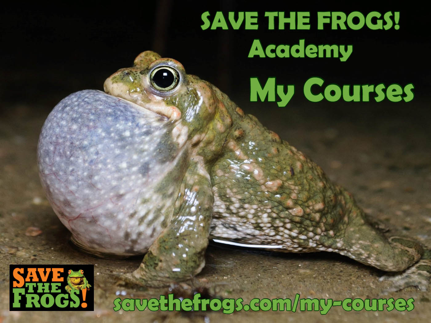 Save The Frogs Academy