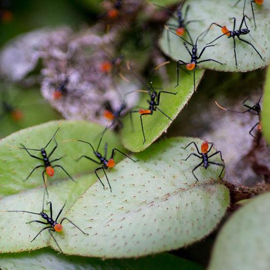 Ants George Quiroga