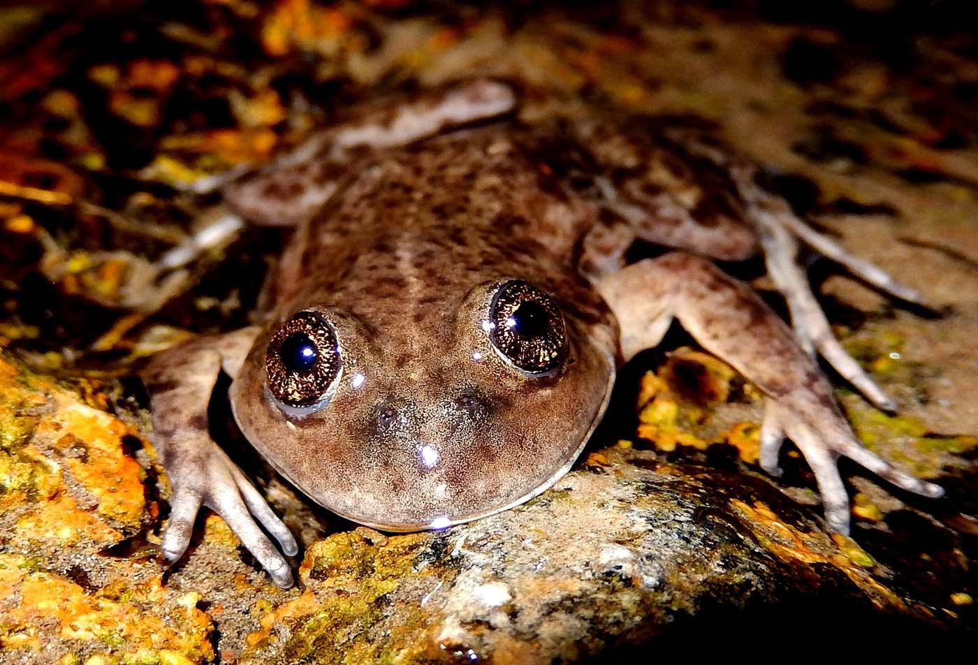 Argentina Federico Kacoliris Frogs