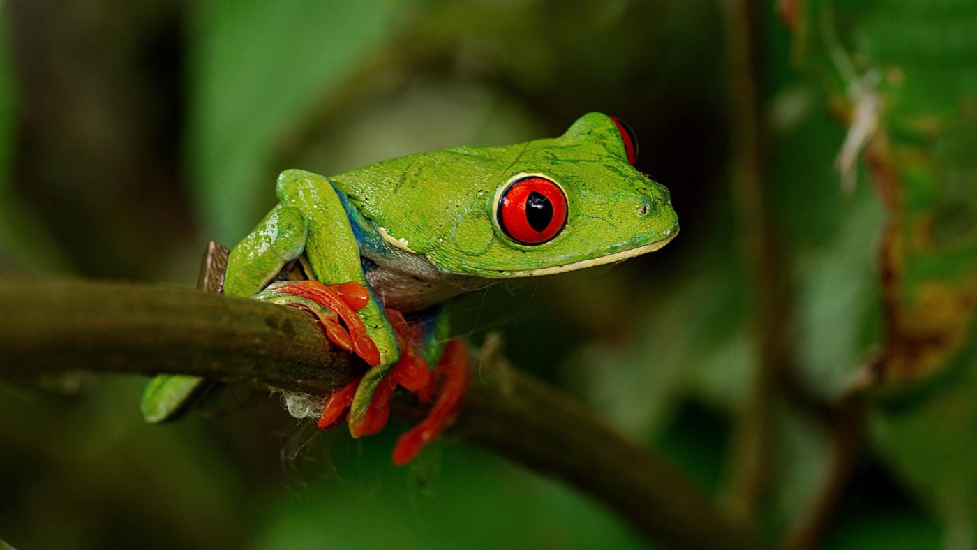 Save The Frogs Day Organize Event