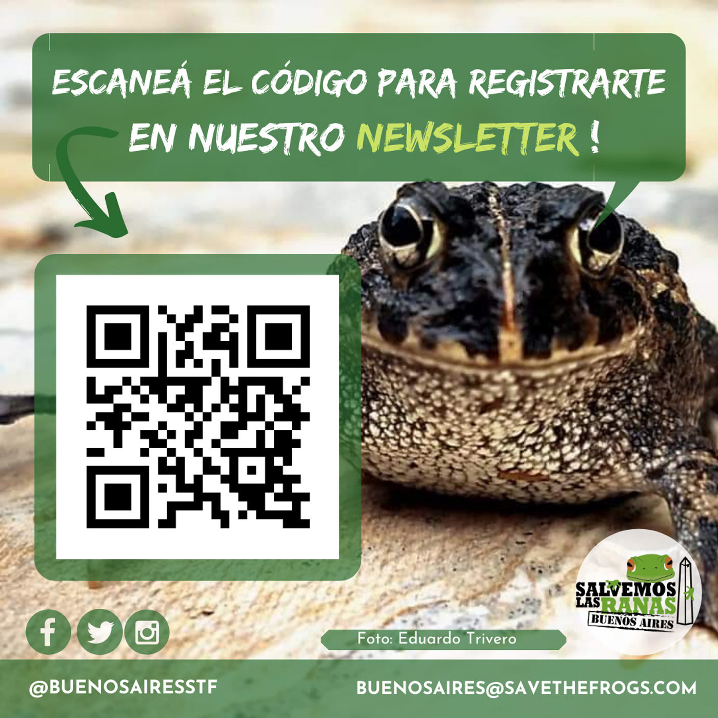 Buenos Aires Frogs Newsletter