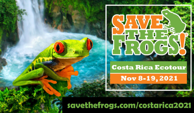 Costa Rica Classic Ecotour Save The Frogs 2021