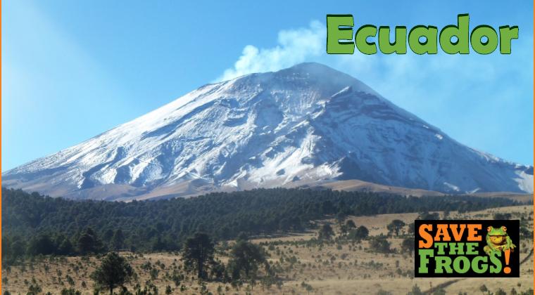 Ecuador amphibians course