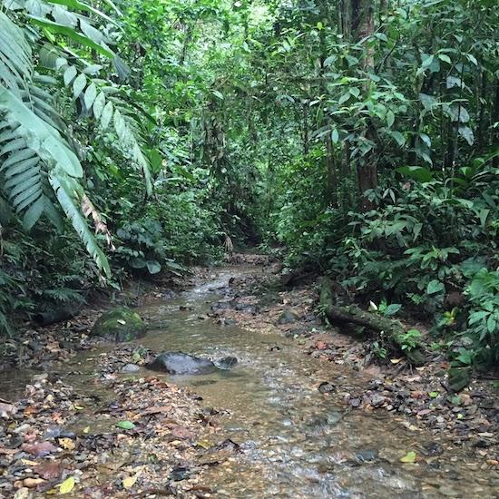 Ecuador cloud forest Chelsea Carson