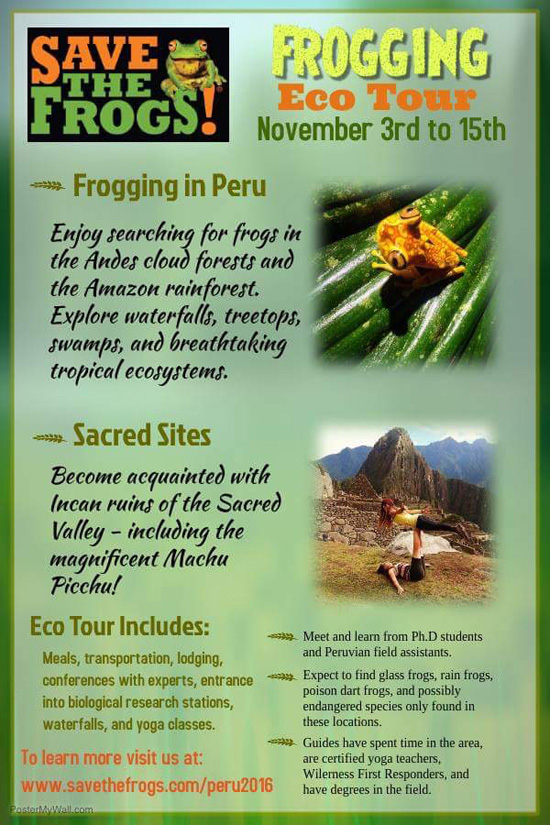Flyer Peru Ecotour Save The Frogs