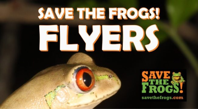 SAVE THE FROGS! Flyers