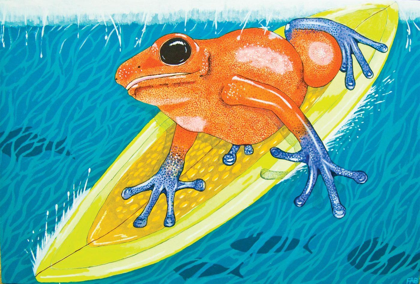 Frank Beifus Surfing Frog