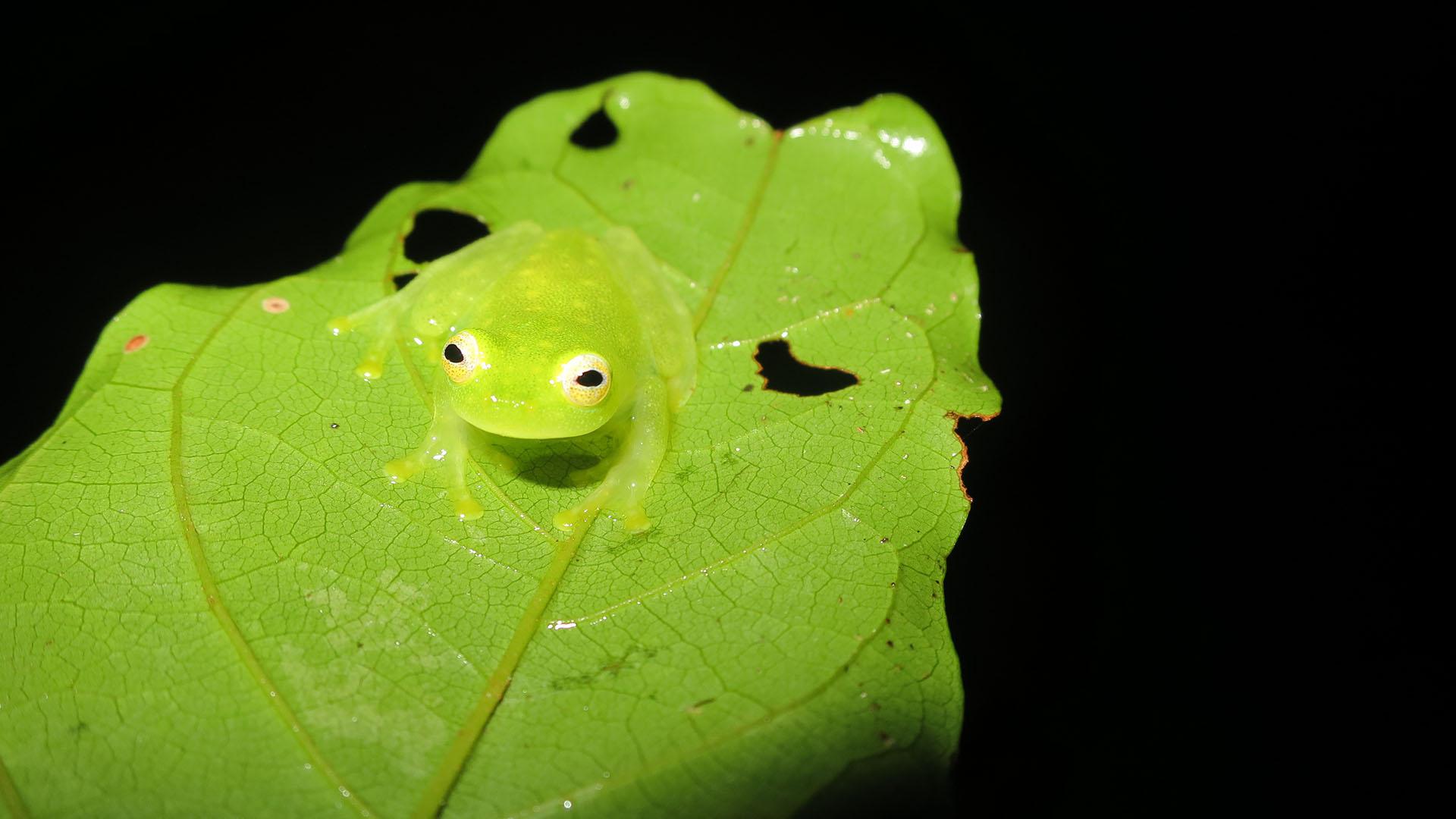 Costa Rica Amphibian Diversity