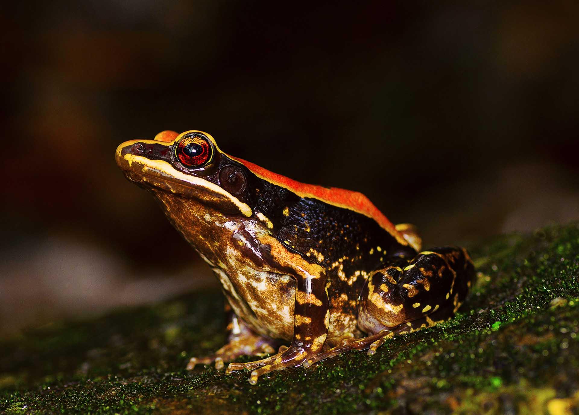Frogs World Summit Kolkata
