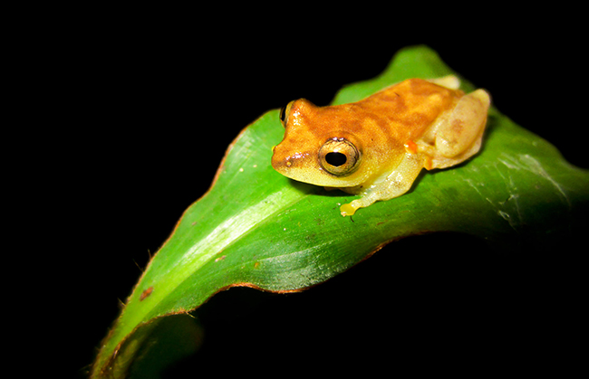 Save The Frogs Travel Awards