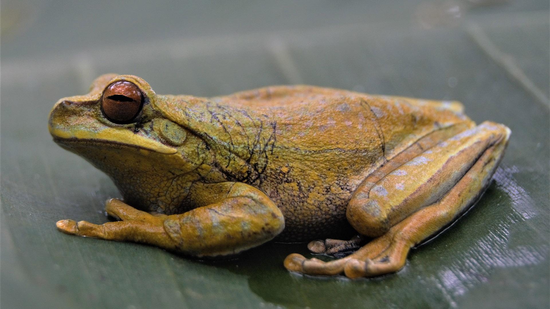 frog charity money