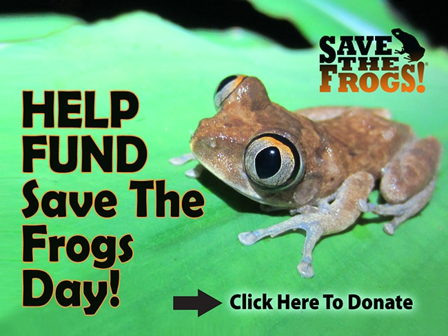 Save The Frogs Day Funding