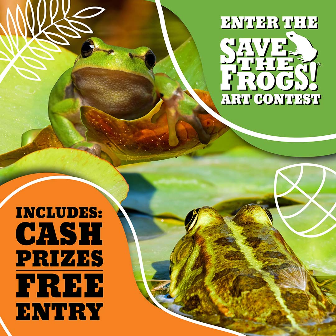 Icon Save The Frogs Art Contest Square