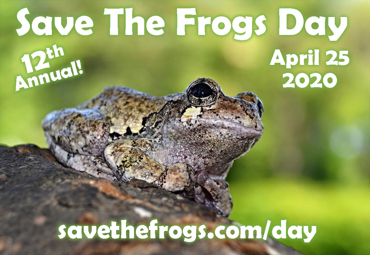 Save The Frogs Day 2020 Icon