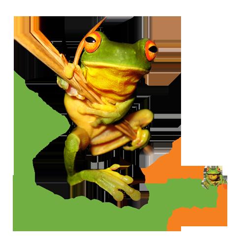 Litoria chloris orange eyed treefrog
