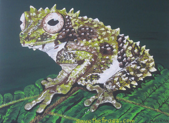 Frog art by Michele Hamill