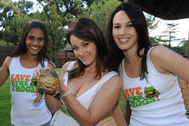save the frogs ladies ribtank