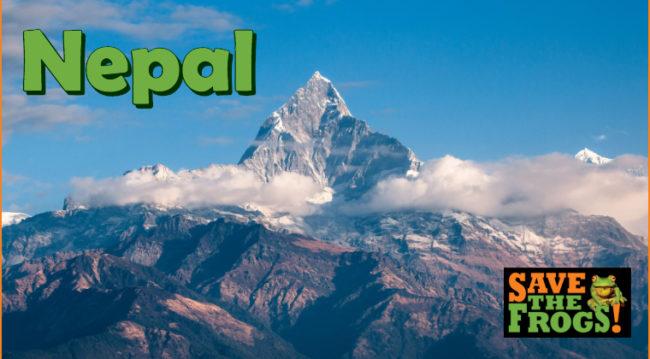 Nepal Amphibians Course