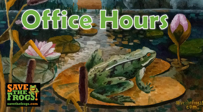 Office Hours Save The Frogs