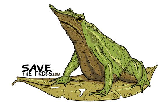 frog artist