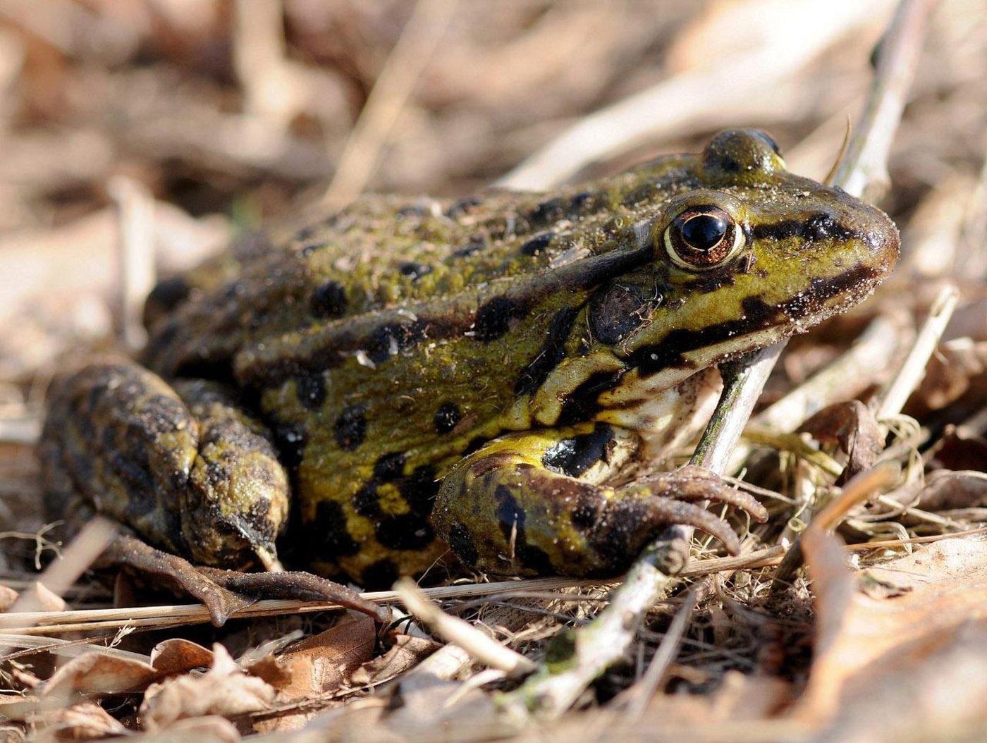 interview frog expert