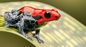 About Save The Frogs