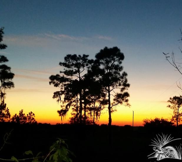 Preserve Sunset WM