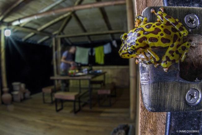 frog conservation ecuador