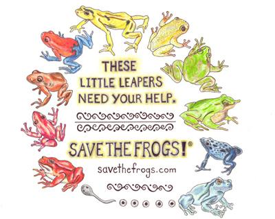 Frog Essay Contest