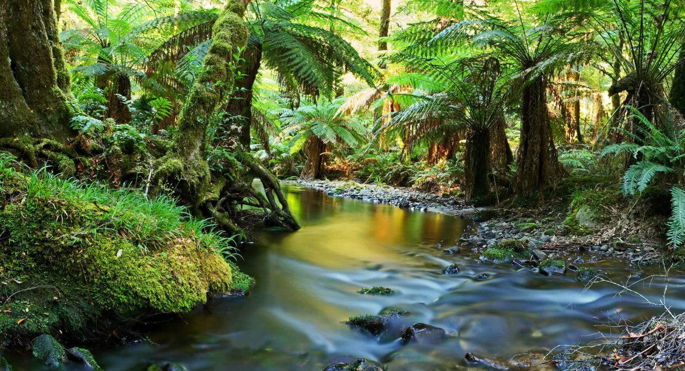 Rainforest Ecotours