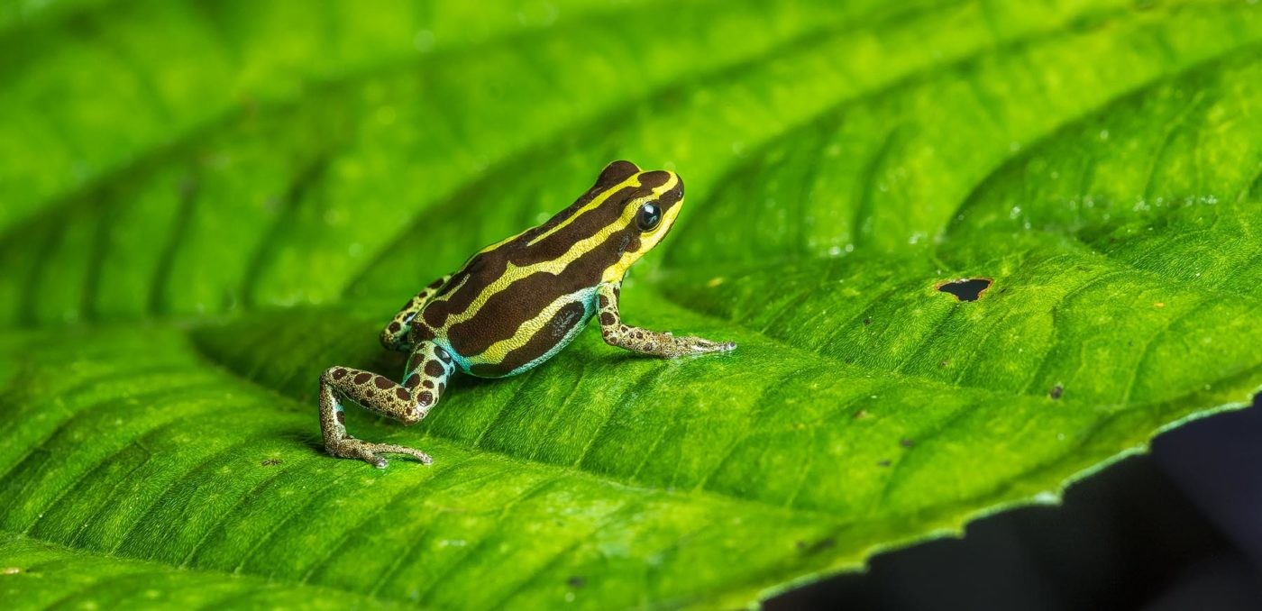 Save The Frogs Travel Grants