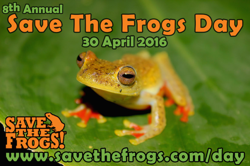 Save The Frogs Day 2016