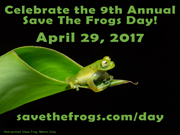 STF Day 2017 red spotted glass frog