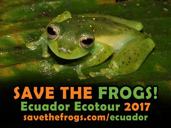 Ecotour, Ecuador