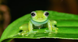 Save The Frogs Ecotours Survey