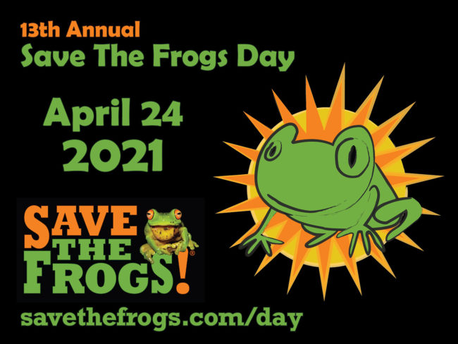 Save The Frogs Day 2021