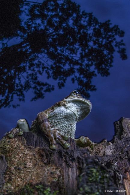 amazon ecotourism