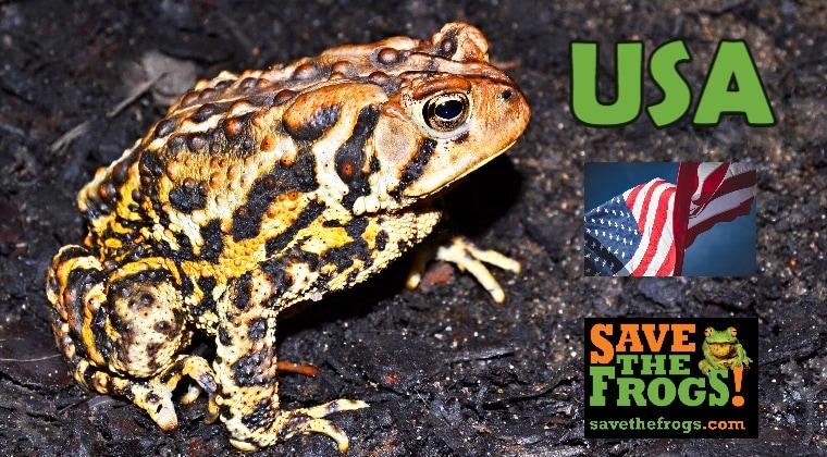 USA Amphibians Course
