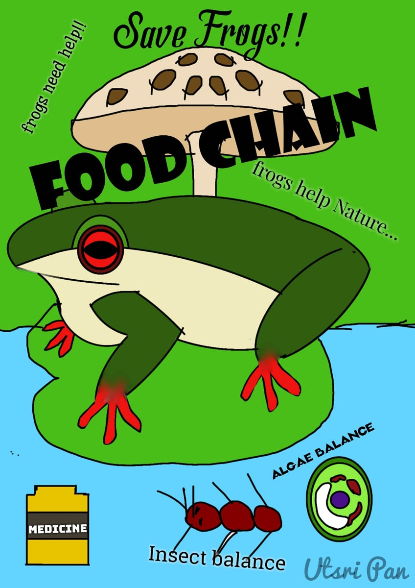 Vivekananda-School-India -2020-save-the-frogs-art-contest