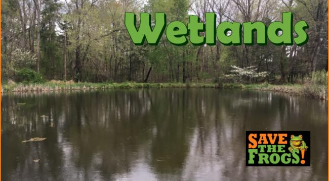 Wetlands course