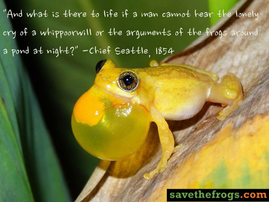 chief seattle frogs