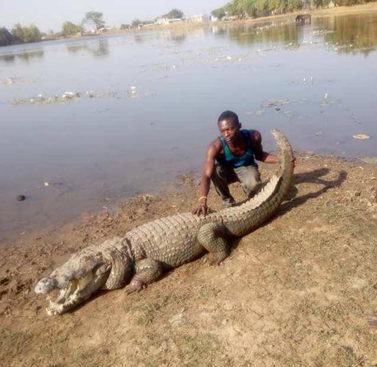 albert chambichoga nile crocodile