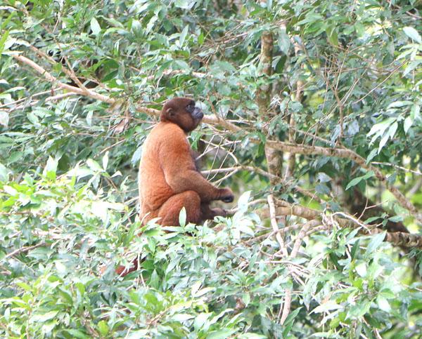 Monkey Ecuador Tour