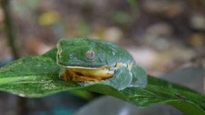 frog news