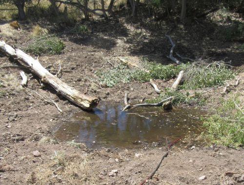 arizona wetlands chiricahua