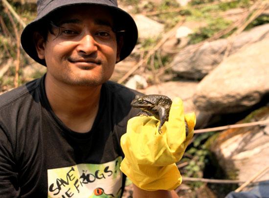 nepal frogs