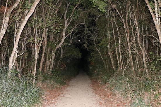 caraca cascatinha trail forest