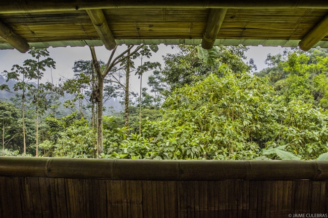 Ecuadorian wildlife